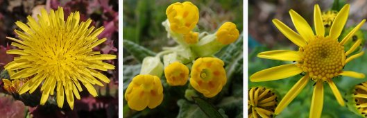 210411 yellow (4)