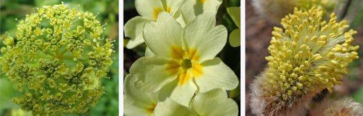 210411 yellow (5)