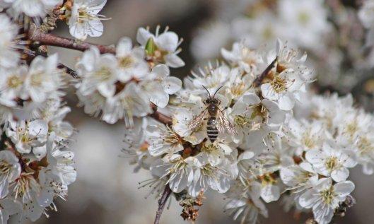 210420 8 bee sp