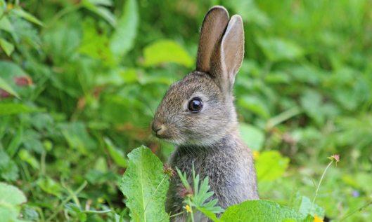 210626 baby bunny