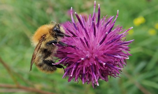 210903 common carder (1)