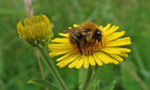 210903 common carder (2)