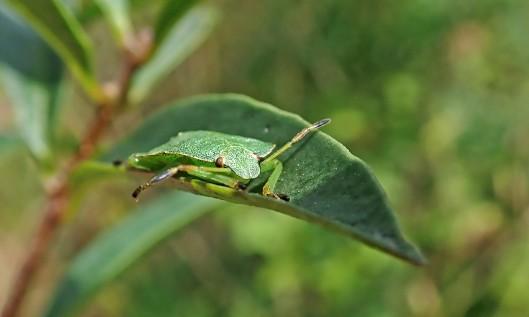 210903 common green (1)