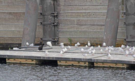 210916 little egret (1)