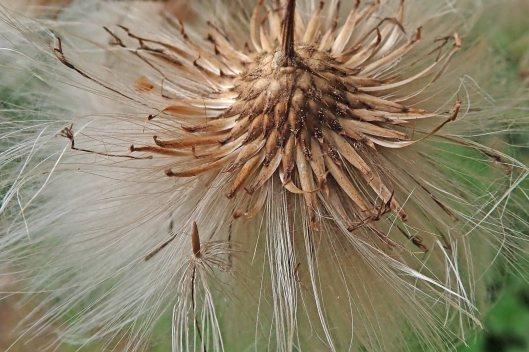210919 seeds (1)