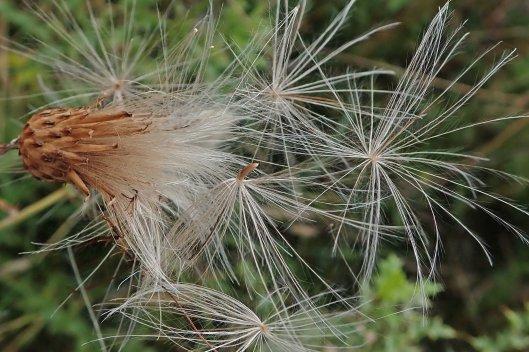 210919 seeds (2)