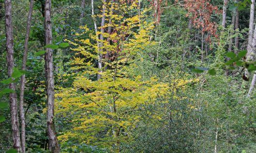 211003 autumn yellow (1)