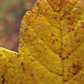 211003 autumn yellow (5)
