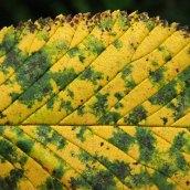 211003 autumn yellow (7)