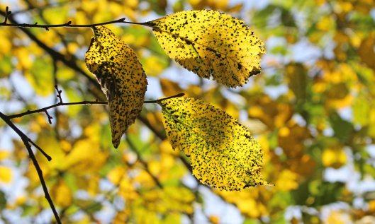 211003 autumn yellow (8)