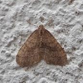 211006 3 winter moth